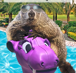 Pux is on Vacation